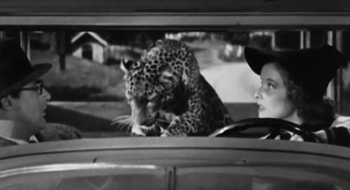 bringing-up-babyleopard[1]