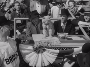 Rhubarb at the baseball game - a butler, some milk and even his own litter box